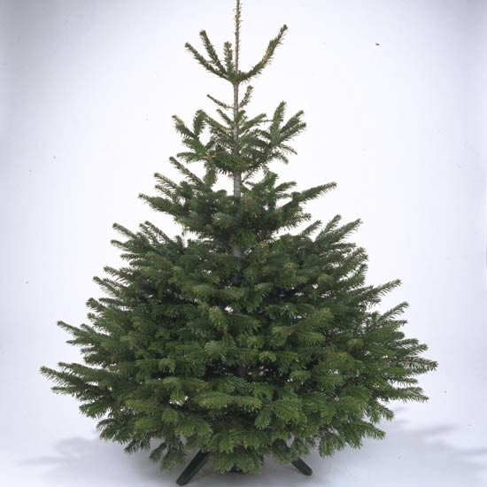 Country Pines Christmas Tree Farms: How To Choose The Perfect