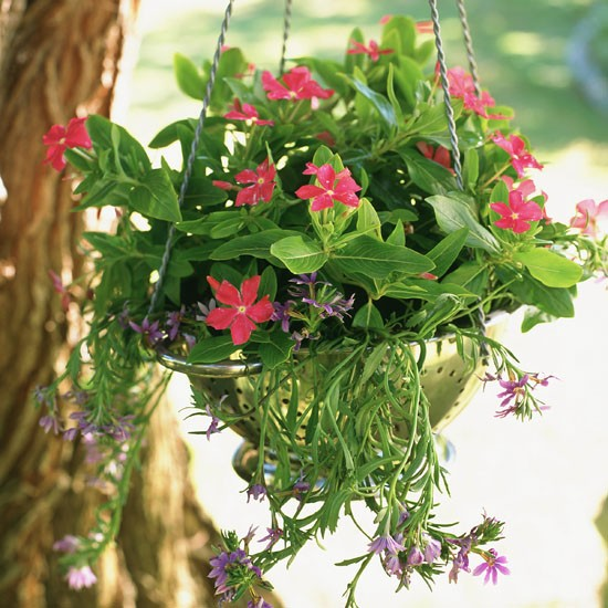 Hanging baskets can make a big difference to the front of a house and ...