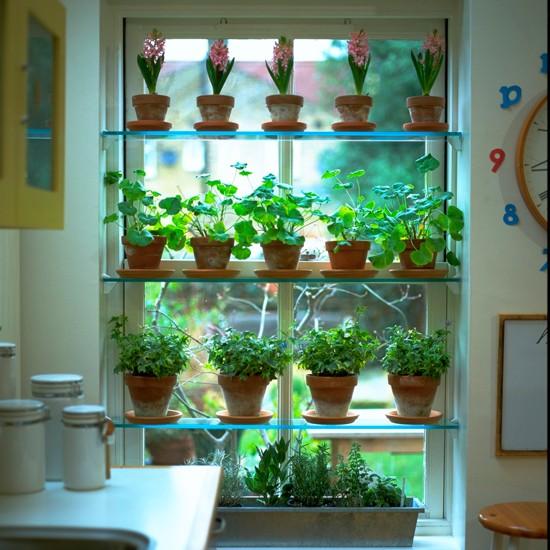 kitchen window plant shelves kitchen decor pinterest. Black Bedroom Furniture Sets. Home Design Ideas